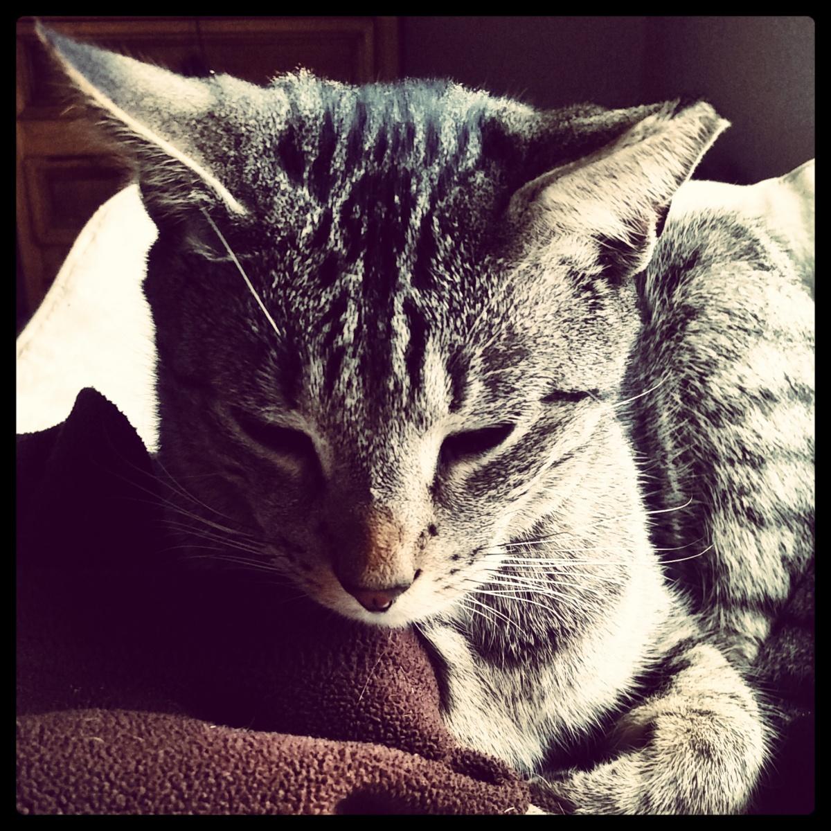 The Cat(s)
